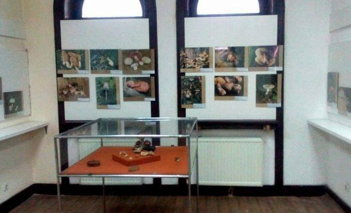 muzej-istocne-bosne-tuzla-postavljena-muzejska-izlozba-gljive-naseg-podrucja.jpg